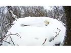 PHOTOS: Bald eagles get snowed in