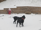8 tips to keep pets safe during winter weather