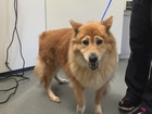 Vets working to heal arthritis in dogs