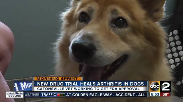 New drug trial heals dogs of arthritis
