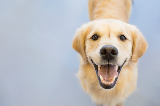 FDA Issues Warning for Dangerous Dog Bone Treats